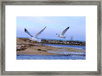 Gulls In Flight 2 Framed Print