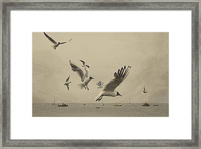 Gulls Framed Print by Linsey Williams