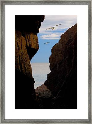 Framed Print featuring the photograph Gulls Of Acadia by Brent L Ander