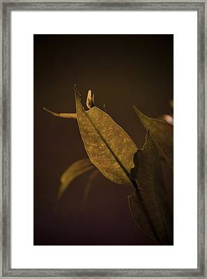 Framed Print featuring the photograph Gum Leaf by Serene Maisey