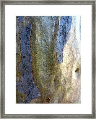 Framed Print featuring the photograph Gum Tree Bark by Roberto Gagliardi
