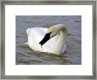 Framed Print featuring the photograph Gurgler by Brian Stevens
