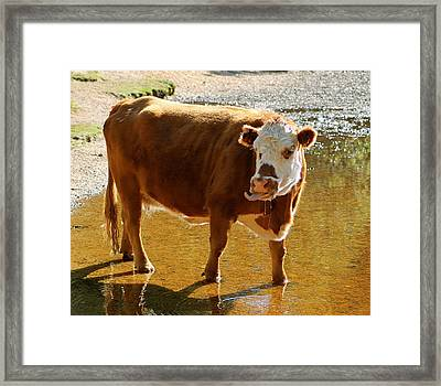 Ha Ha Ha Framed Print by Karen Grist