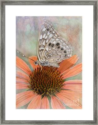 Hackberry Emplorer Butterfly Framed Print by Betty LaRue