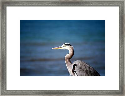 Hadley Thinks Of Another Place Framed Print by Alisa Advani