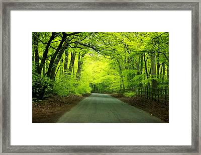 Halcyon Framed Print by Rdr Creative
