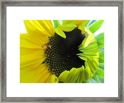 Framed Print featuring the photograph Half-bloom Beauty by Tina M Wenger