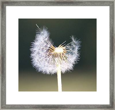 Half Gone Framed Print by Karen Grist