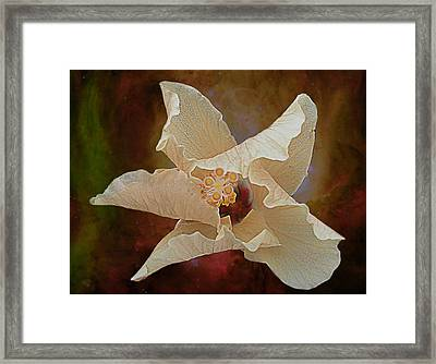 Hibiscus Floats In Space Framed Print by Barbara Middleton