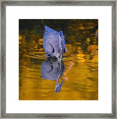 Halloween Heron Framed Print by Brian Stevens