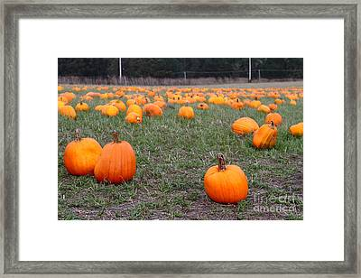 Halloween Pumpkin Patch 7d8383 Framed Print by Wingsdomain Art and Photography