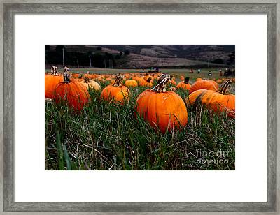 Halloween Pumpkin Patch 7d8405 Framed Print by Wingsdomain Art and Photography
