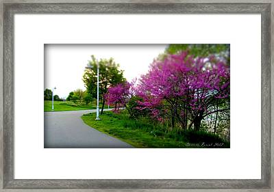 Framed Print featuring the photograph Hamilton Harbor Front Pretty In Pink by Danielle  Parent