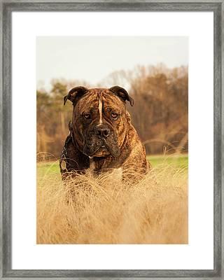 Hammer Tallgrass Framed Print by Tommy  Urbans