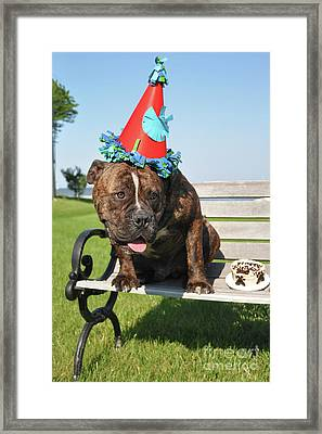 Hammer's 1st Birthday Framed Print by Tommy  Urbans