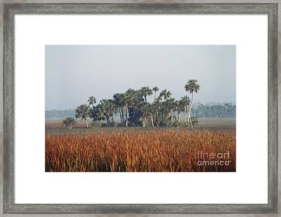 Hammock, Everglades National Park Framed Print