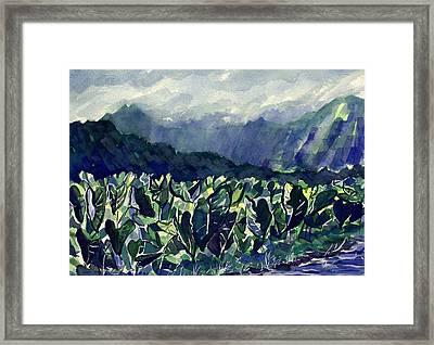 Hanalei Taro Framed Print by Jon Shepodd