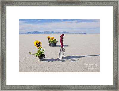 Hand Trowel And Plants Framed Print by Thom Gourley/Flatbread Images, LLC