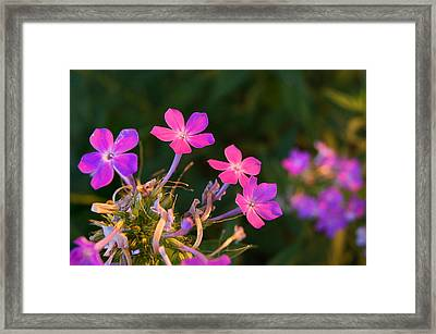 Hands Lifted High Framed Print by Bill Pevlor
