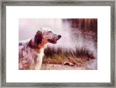 Handsome Hunter. English Setter Framed Print by Jenny Rainbow