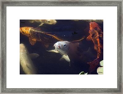Handsome Framed Print by Kat Besthorn