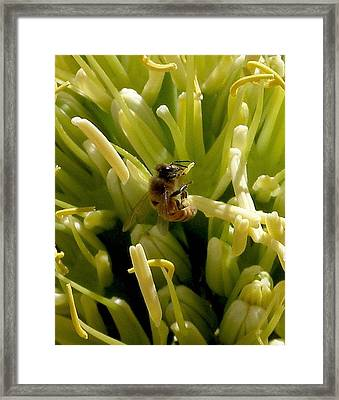 Hang In There Framed Print by FeVa  Fotos