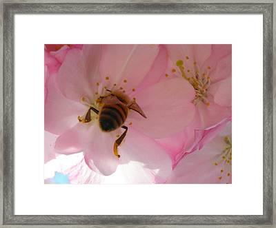 Hangin' With The Honey Bee Framed Print by Stacy Lanyon