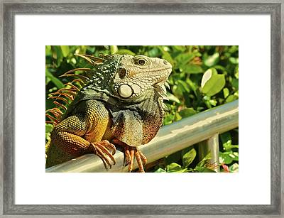 Hanging At The Pool Framed Print by Nancy Rohrig