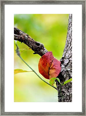 Hanging By A Limb Framed Print by Maria Urso
