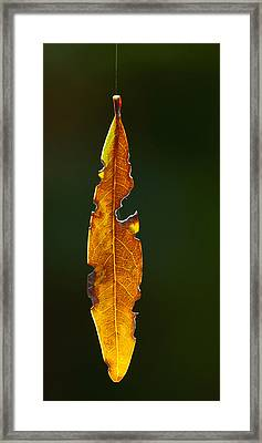 Hanging By A Thread Framed Print by Don Durfee