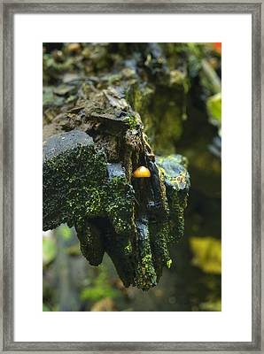 Hanging In There Framed Print by Michael Peychich