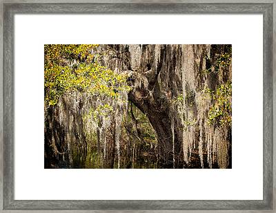 Hanging Moss Framed Print by Denis Lemay
