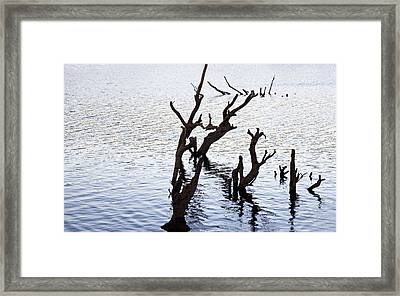 Hanging On A Branch Framed Print