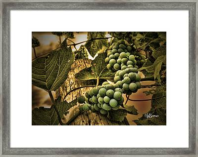 Hanging On A Vine Framed Print by Jeff Swanson