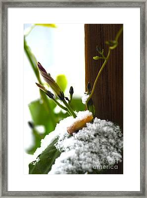 Hanging On Framed Print by Elaine Mikkelstrup