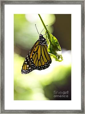 Hanging On  Framed Print by Leslie Leda