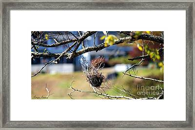 Hanging On Framed Print by Lorraine Louwerse