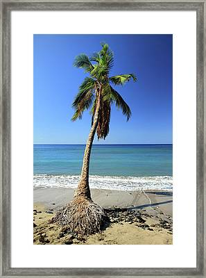 Hanging On Framed Print by Pierre Leclerc Photography
