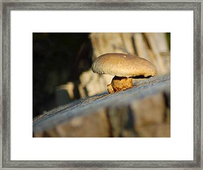 Hanging On Framed Print by Wade Clark