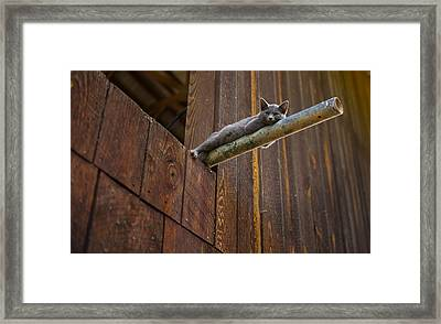 Hanging Out Framed Print by James Massey