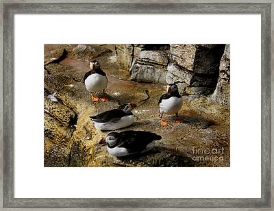 Hanging Out Framed Print by Lee Dos Santos