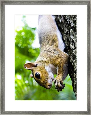 Hanging Out Framed Print by Nicholas Evans