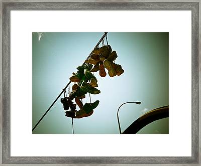 Hanging Out On A Wire Framed Print by Michael Knight