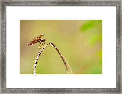 Hanging Out Framed Print by Rita Fuller