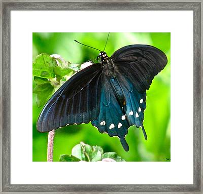 Hanging Out With The Flowers Framed Print by Debra     Vatalaro