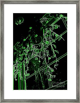 Framed Print featuring the photograph Hanging Plants In Window by Renee Trenholm