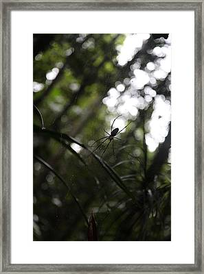 Hanging Spider Framed Print