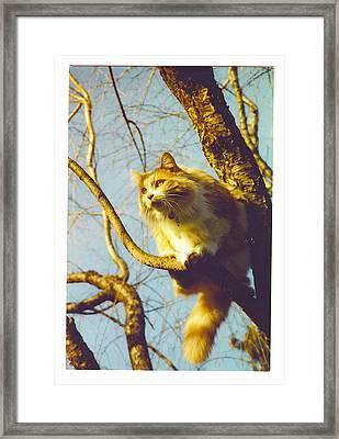 Hanserelli In Tree Framed Print