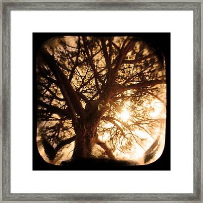 Happiness Lives Framed Print