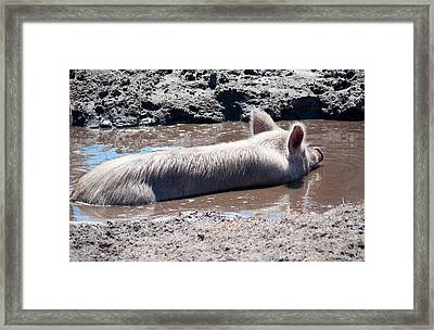 Happy As A Pig In The Mud Framed Print by Kenneth Albin